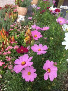 季節の色を楽しみたい。