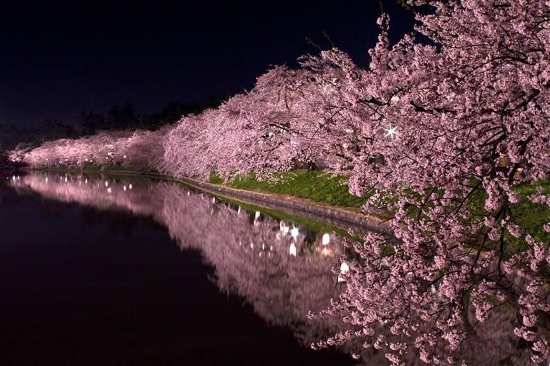 4/2(土)大人のお花見「お花見宴会&夜桜クルージング」中之島ラブセントラル
