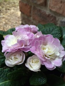 その薄紫の花びらは、自然の魅力的な色