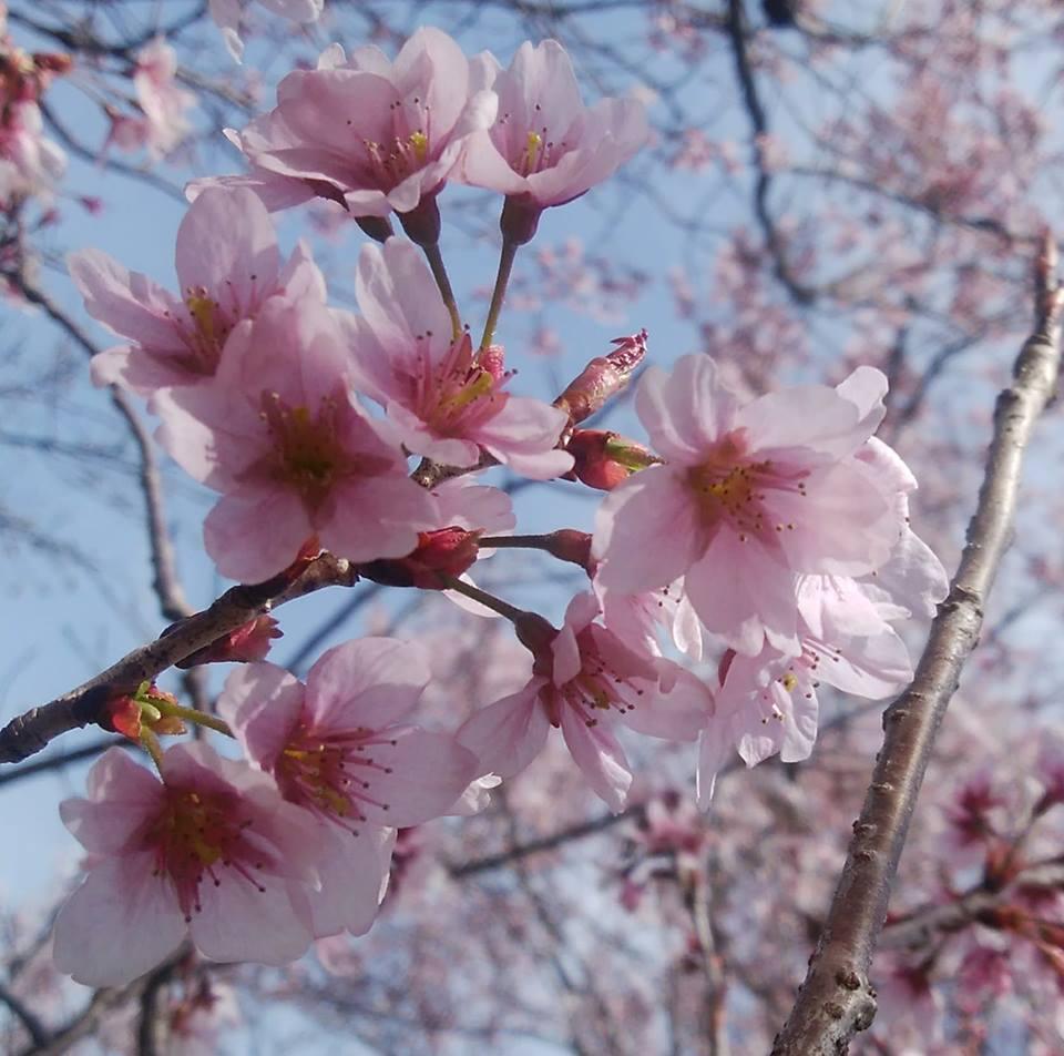 2/16(土)色彩心理カウンセラージョーの『豊かな色の艶女会(アデジョカイ)』