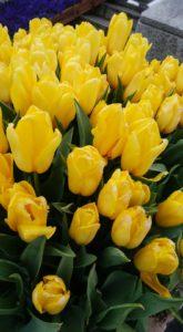 心弾む色「黄色」♪