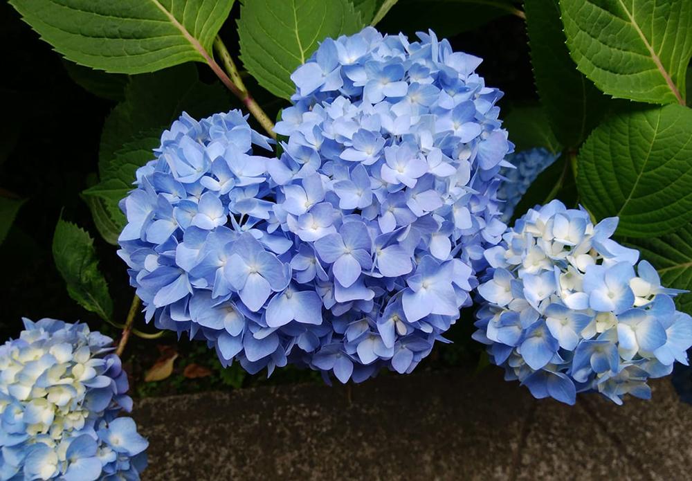 4/6(土)色彩心理カウンセラージョーの『豊かな色の艶女(アデジョ)会』