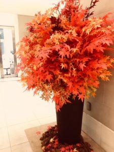 秋、紅葉カラー効果は?