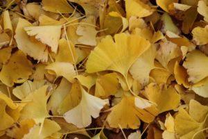 あなたの秋色はなんですか?